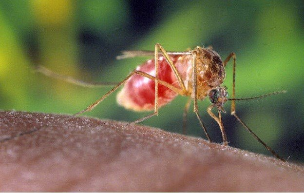 First West Nile-Related Death of 2017 Reported in Tarrant County