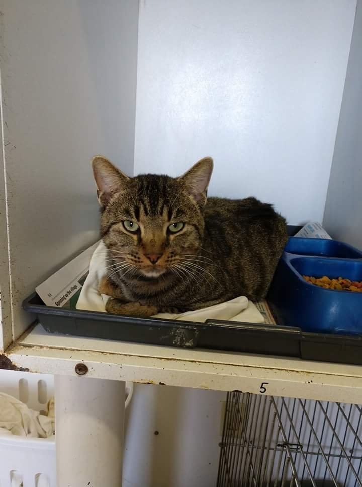 Cat with no name: (618) 244-8024