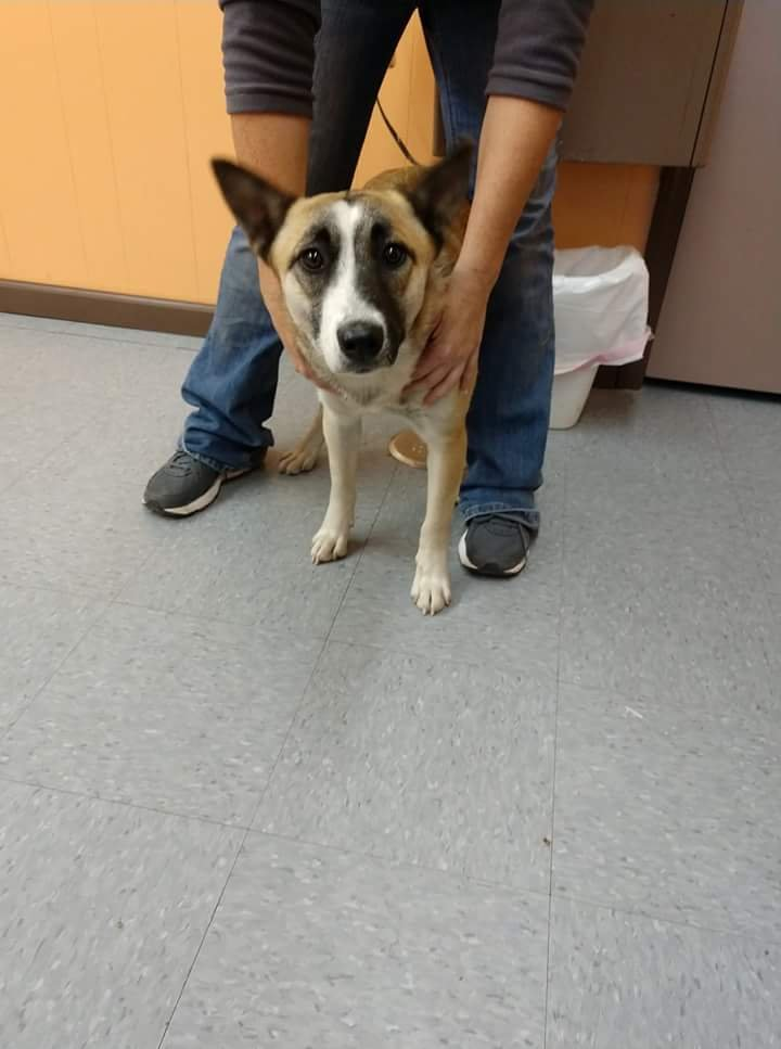 Shepherd, Jefferson County Animal Control:(618) 244-8024