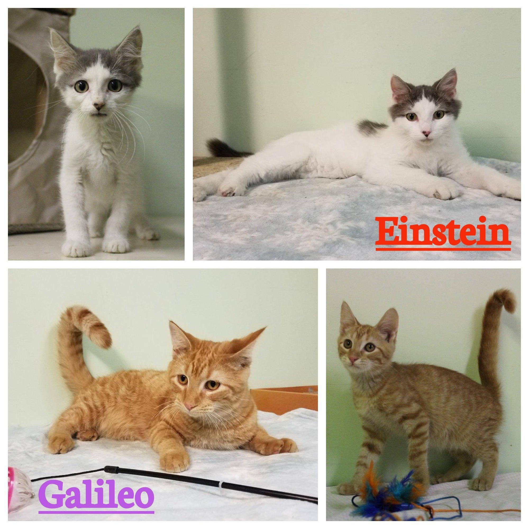 Einstein & Galileo, Humane Society of SI: (618) 457-2362