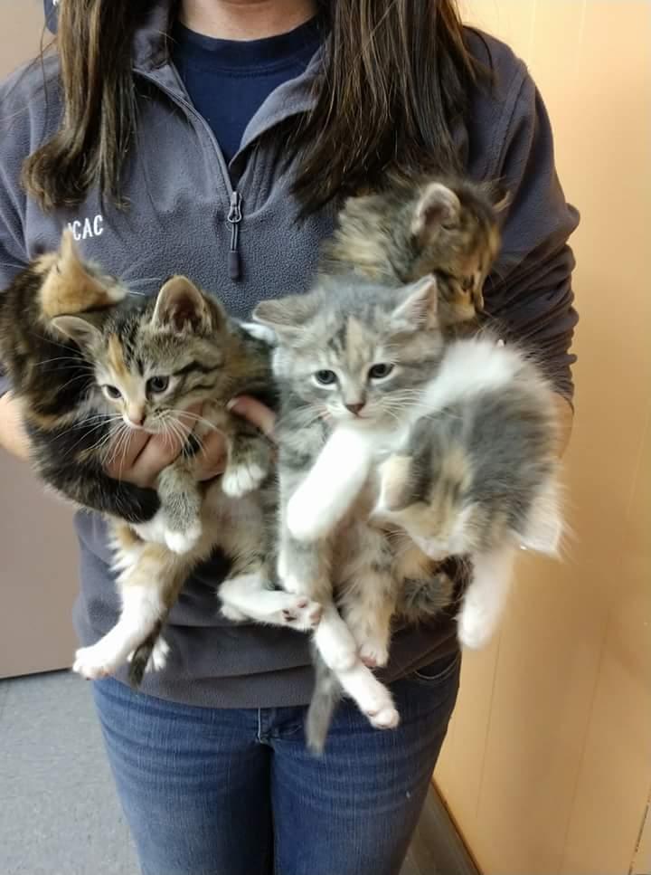 Kittens, Jefferson Co. Animal Control: (618) 244-8024