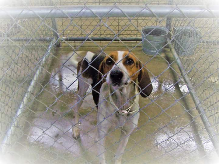 Saline Co. Animals Control: (618) 252-7859