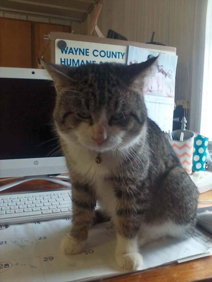 Wayne Co. Animal Control (618) 847-4012
