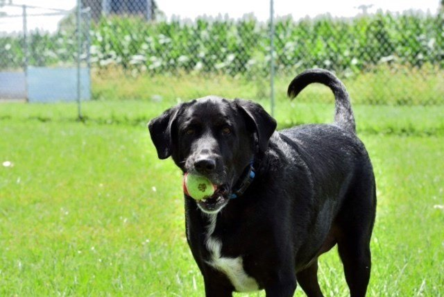 Perry Co. Humane Society - (618) 542-DOGS