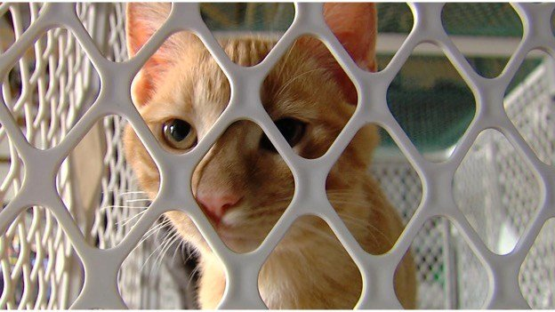 Rescue Shelter Opens In Marion Helping Animals Find Forever Home