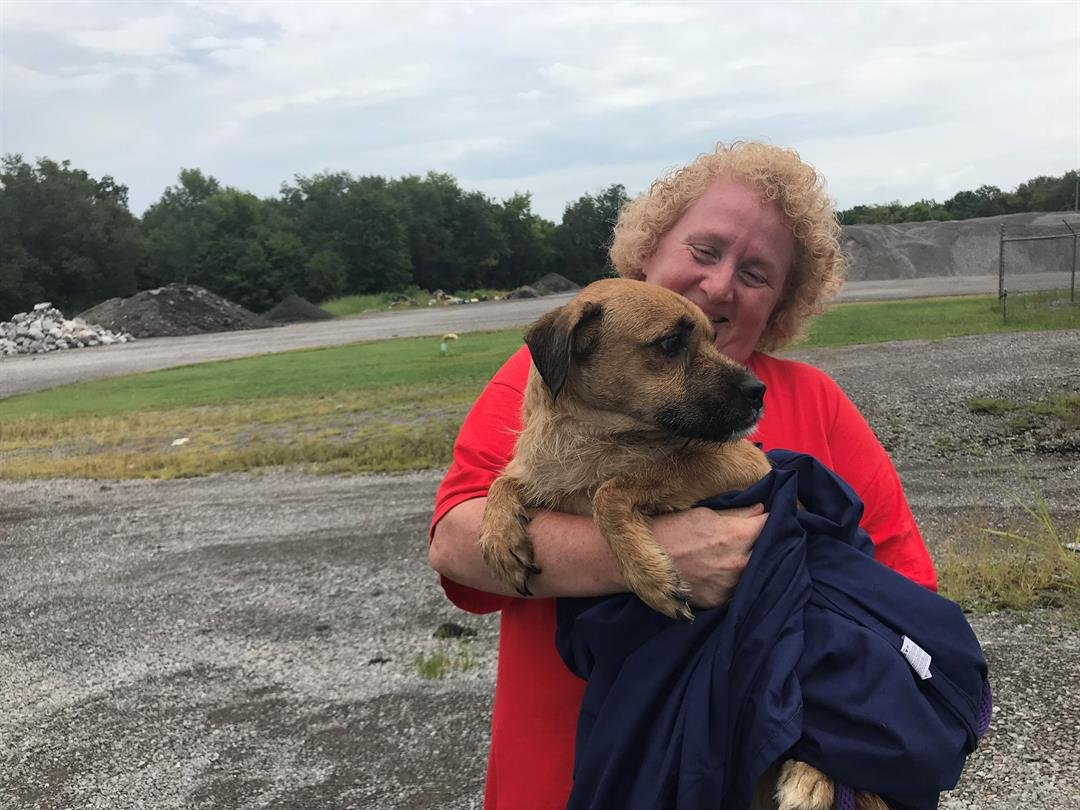 447d406e6d57 Franklin County Animal Control seizes 91 dogs from one home - WSIL-TV 3  Southern Illinois