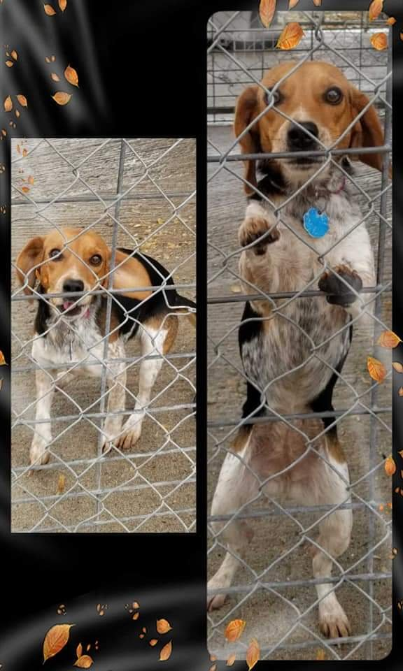 Union Co. Animal Control: (618) 833-4915
