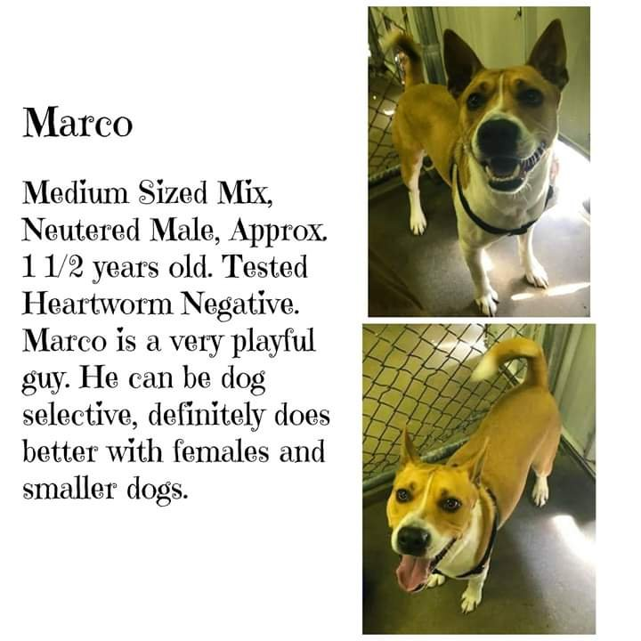 Marion Animal Control (618) 993-2991