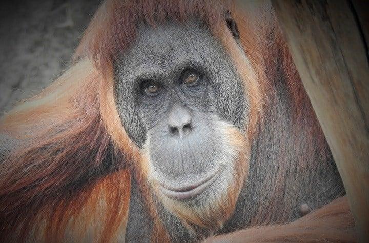 JoEllen Toler/St. Louis Zoo