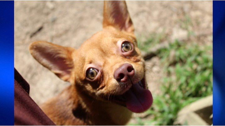 Humane Society of Southern Illinois: (618) 457-2362