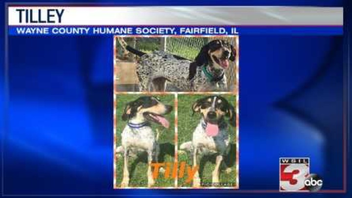 Wayne County Humane Society: 618-847-4012