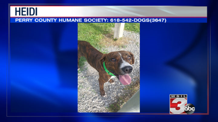 Perry County Humane Society: 618-542-DOGS(3647)