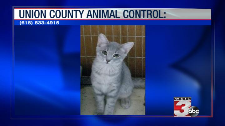 Union County Animal Control: (618) 833-4915