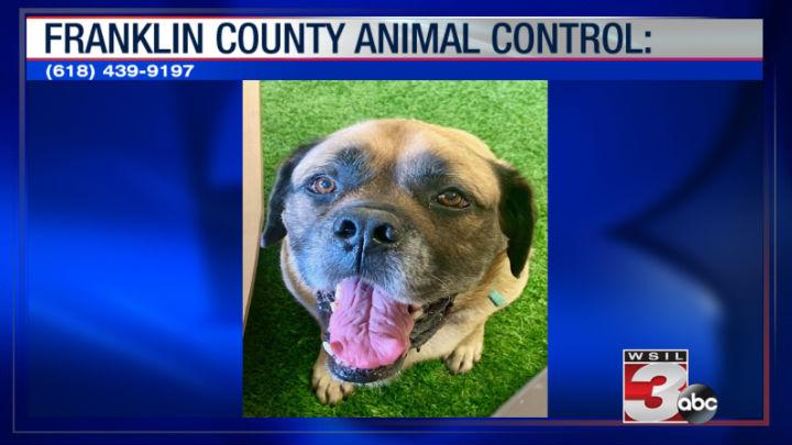Franklin County Animal Control: (618) 439-9197