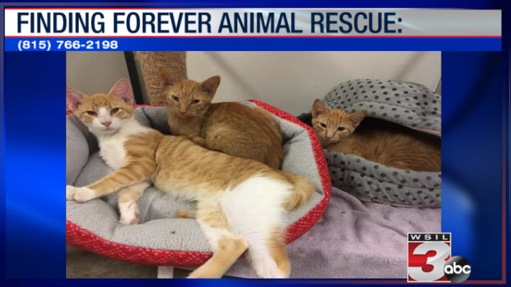 Finding Forever Animal Rescue:(815) 766-2198