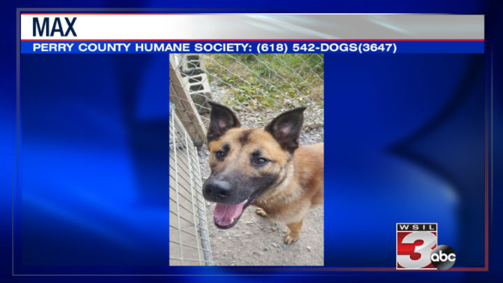 Perry County Humane Society: (618) 542-DOGS(3647)