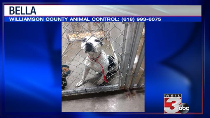 Williamson County Animal Control: (618) 993-6075