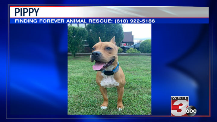 Finding Forever Animal Rescue: (618) 922-5186
