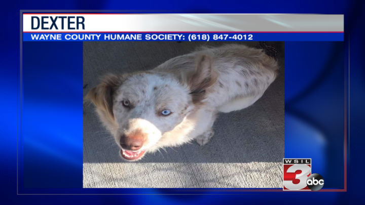 Wayne County Humane Society: (618) 847-4012