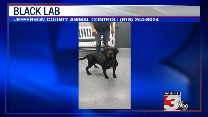 Jefferson County Animal Control: (618) 244-8024