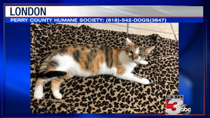 Perry County Humane Society: (618)-542-DOGS(3647)