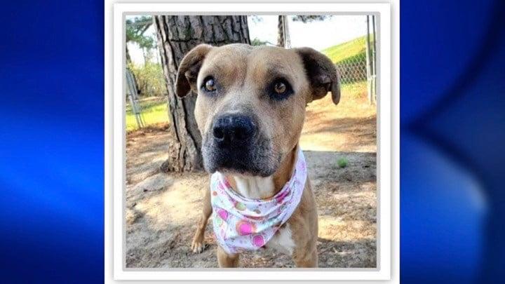 Southern Illinois Humane Society: (618) 457-2362